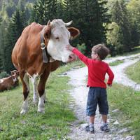 De Jong Intra Vakanties - Oostenrijk