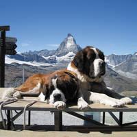 Bij Gornergrat met Matterhorn