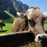 Fietsen Oostenrijk, De Jong Intra Vakanties