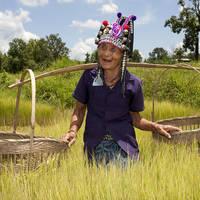 Akha stam Thailand