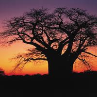 ZAF Limpopo intro / Kruger