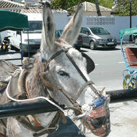 ezeltaxi in Mijas