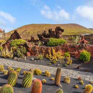 Kaktussen in vulkanisch landschap