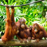 19 daagse privé rondreis West Maleisië Borneo inclusief gids chauffeur
