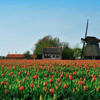 7-daagse riviercruise Door vier Hollandse Provincies met mps Horizon
