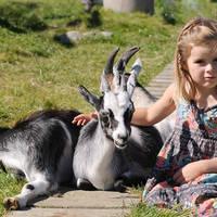 Meisje met geitjes