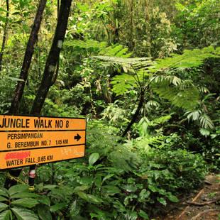 Maleisië Jungle Cameron Highlands