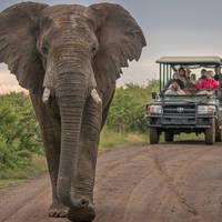 Addo Elephant National Park - Game Drive met Ranger
