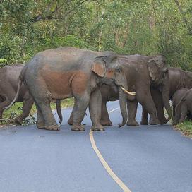Individuele reizen Thailand