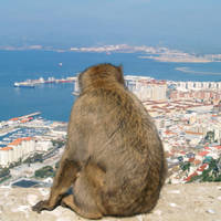Gibraltar aap