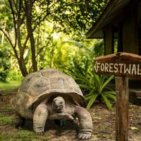Giant Tortoises - Seychellen