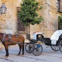 Paard en wagen in Cordoba