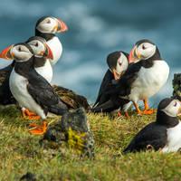 10 daagse fly drive Welkom op de Shetlands