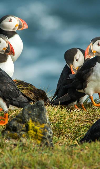10-daagse fly-drive Welkom op de Shetlands
