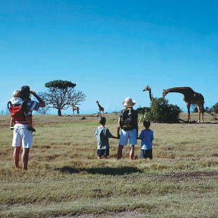 Met de familie giraffen kijken
