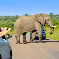 Overstekende olifant, Addo Elephant National Park